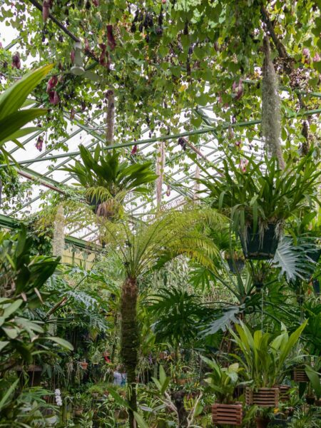 Ceiling view of the greenhouse orchid collection, Chateau du Champ de Bataille, Normandy, France