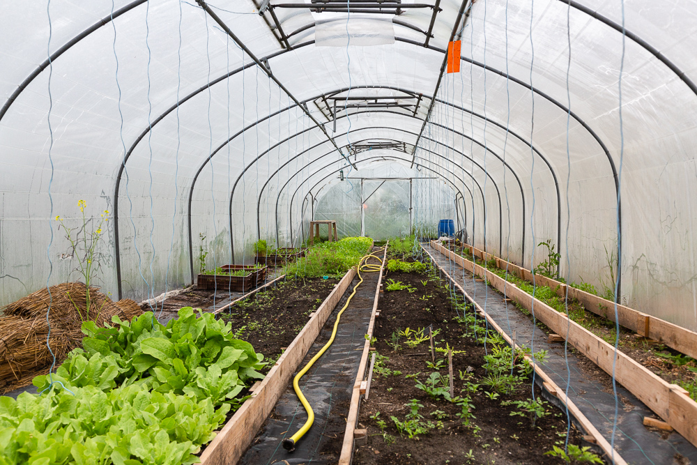 Greenhouse in the garden of the Sensitive Zone, Seine-Saint-Denis.  L'inauguration de la Ferme Urbaine de Saint-Denis le 11 mai 2019.  Zone Sensible / Parti Poétique et la Ferme Ouverte de Saint-Denis.
