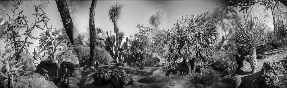 Black and white photograph of a cactus garden, Las Vegas, Nevada.  Series entitled Lieux-dits by Elise Prudhomme.