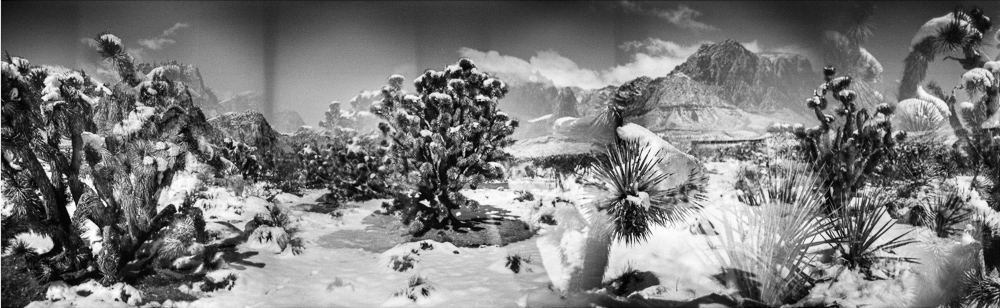 Black and white photograph of joshua trees in the snow, Blue Diamond, Nevada.  Series entitled Lieux-dits by Elise Prudhomme.
