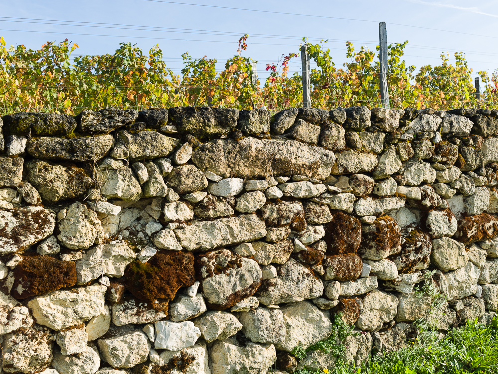 A clay-limestone bordering wall in the vineyards of Wine Estate Chateau Pavie Macquin, Saint Emilion, Bordeaux region, Gironde, France.