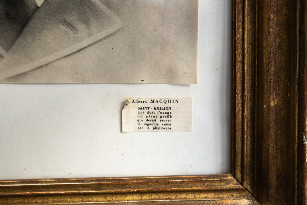 Albert Macquin - Saint Emilion owes him the use of the grafted plant which was to save the vineyard ruined by phylloxera.