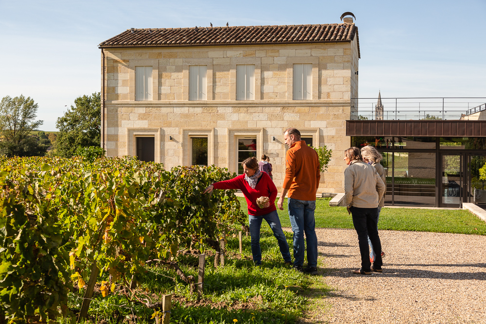 Discussing the vines in the vineyards of Château Pavie-Macquin, Saint-Emilion, Bordeaux region, Department of the Gironde, France.