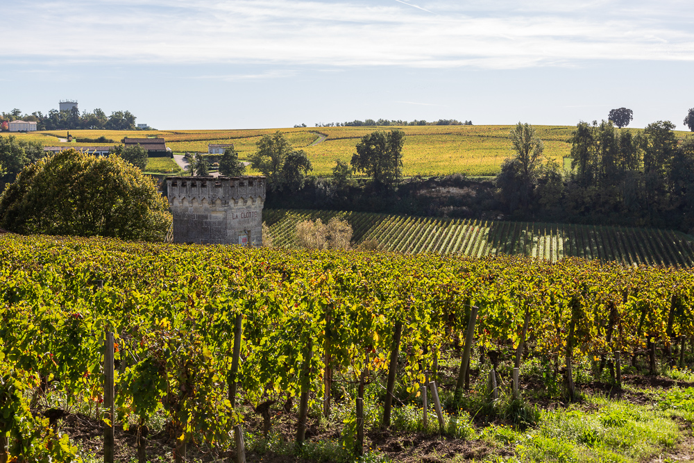 Looking out to Chateau Pavie Macquin from the ancient Brunet Gate, Saint-Emilion, Gironde, France.