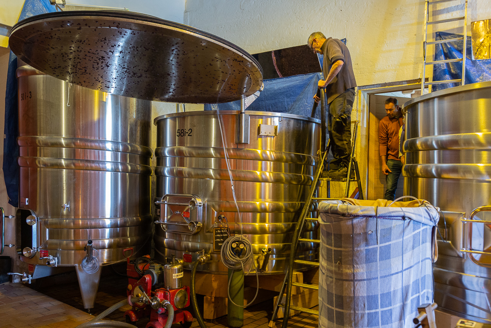 Topping off stainless steel tanks at Wine Estate Chateau Pavie Macquin, Saint Emilion, Bordeaux region, Department of the Gironde, France.