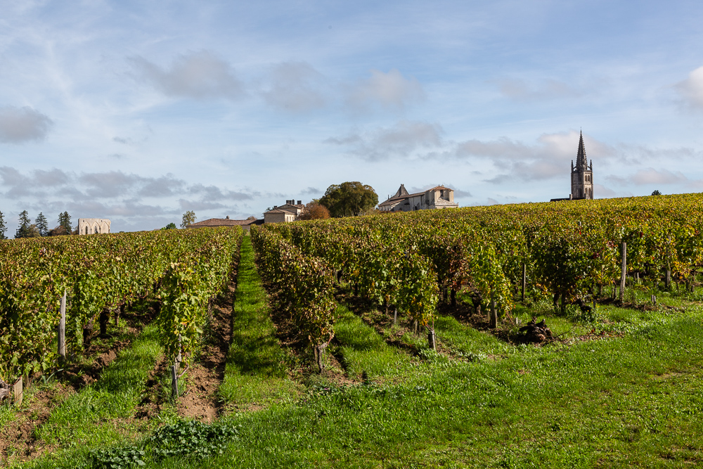 Vineyards in the Bordeaux wine region of Saint Emilion with the town and collegiale church in the background, Department of the Gironde, France.