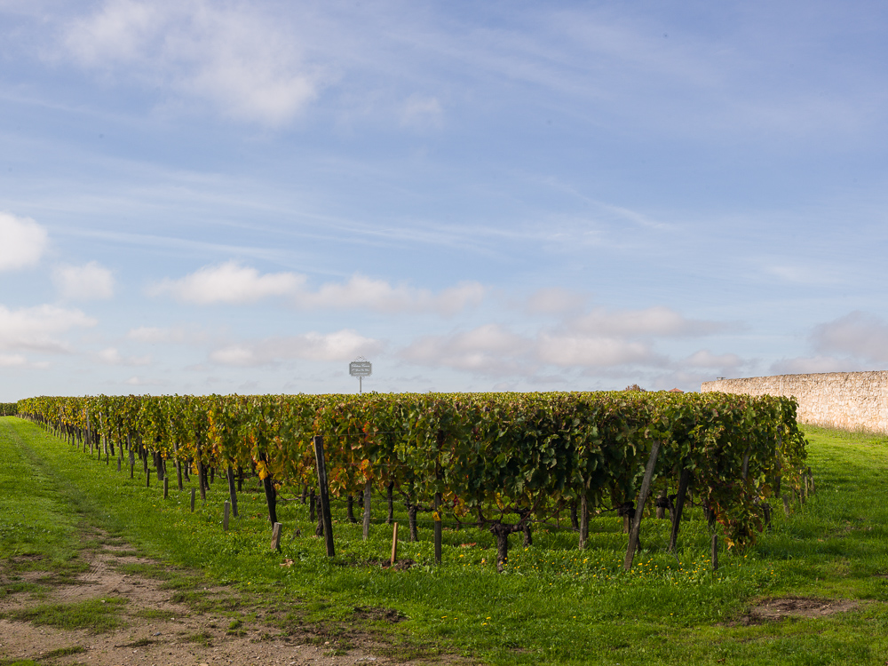 Vineyards at Chateau Canon 1er Grand Cru Classe, Saint-Emilion in the Bordeaux wine region, Gironde, France.
